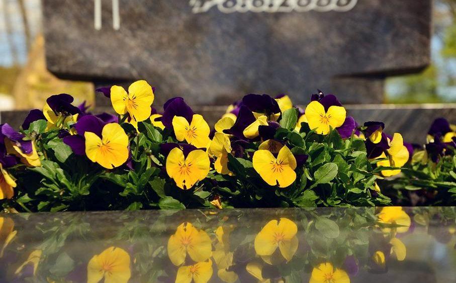 Hyazinthe, Blume für Bestattung, Blume für Beerdigung