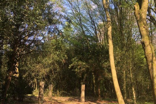 Naturnahe Bestattung jetzt auch in Bochum möglich